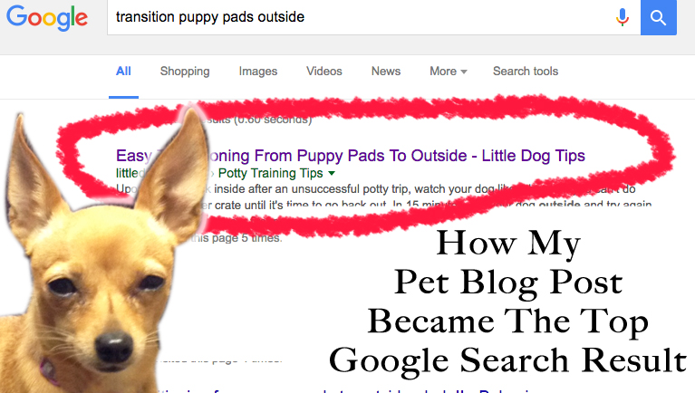 pet blog top google search result