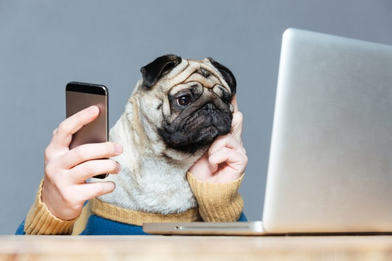 Pet Industry Press Release How To Get Picked Up Tips