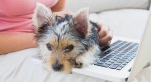 Pet Copywriter Blogger Lindsay Pevny
