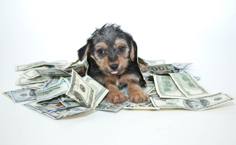 "How To Keep ""Money Blocks"" From Blocking Your Pet Business"