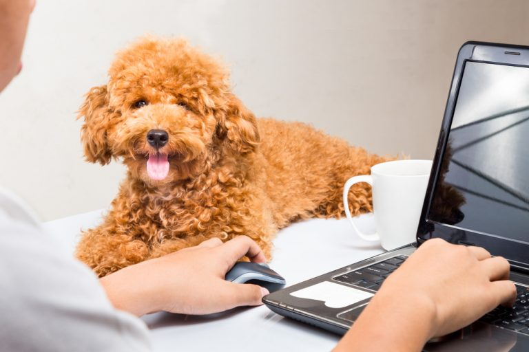 Article marketing services for veterinarians